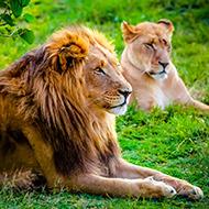 南非的动物们