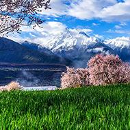 大峡谷看桃花