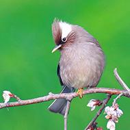 森林里可爱的小鸟们