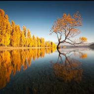 新西兰 聆听自然的声音