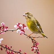 抓拍鸟类美图集锦