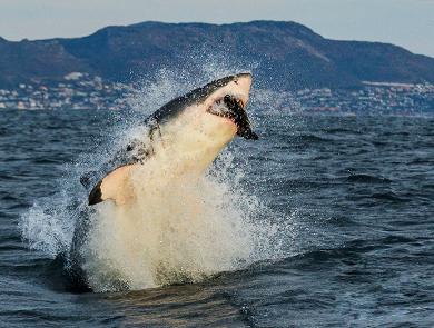 我与鲨鱼共舞的那些日子